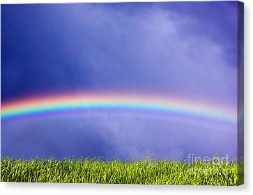 Fresh Grass And Sky With Rainbow Canvas Print by Michal Bednarek