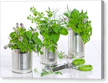 Fresh Herbs In Recycled Cans Canvas Print