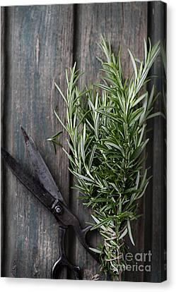 Fresh Herbs Canvas Print by Mythja  Photography