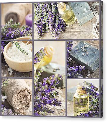 Fresh Lavender Collage Canvas Print by Mythja  Photography