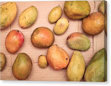 Cardboard Canvas Print - Fresh Mangos by Tom Gowanlock