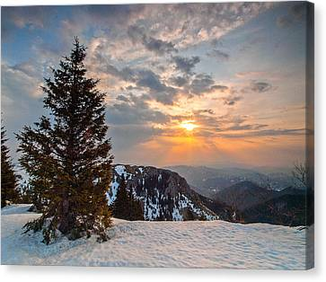 Fresh Morning Canvas Print by Davorin Mance