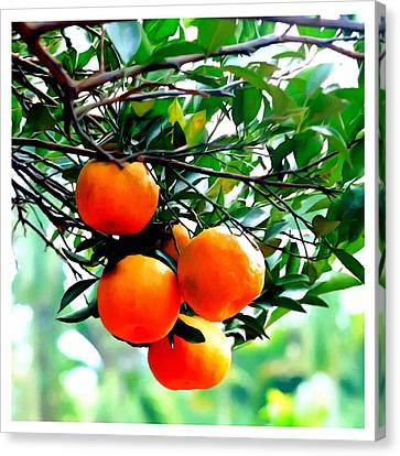 Fresh Orange On Plant Canvas Print by Lanjee Chee