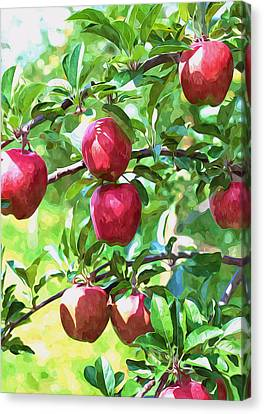 Fresh Organic Apples Canvas Print by Lanjee Chee