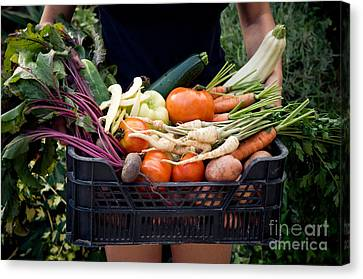 Fresh Organic Vegetables Canvas Print