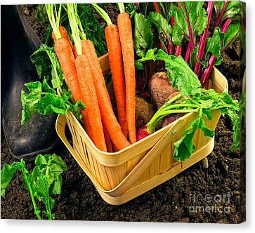 Fresh Picked Healthy Garden Vegetables Canvas Print by Edward Fielding