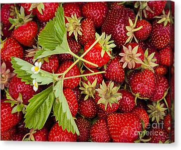 Produce Canvas Print - Fresh Picked Strawberries by Elena Elisseeva