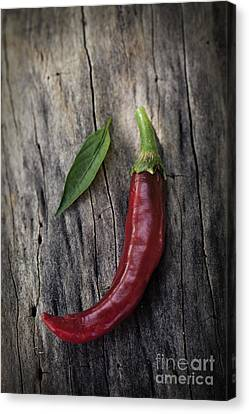 Fresh Red Chili Pepper Canvas Print by Mythja  Photography