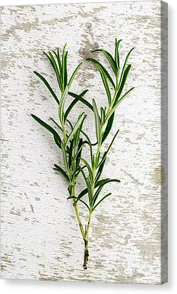Fresh Rosemary Canvas Print