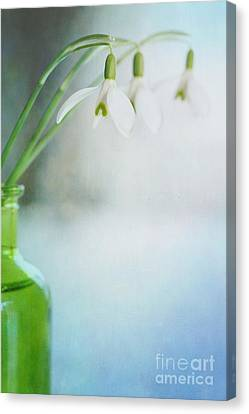 Close Up Floral Canvas Print - Fresh Spring by Priska Wettstein