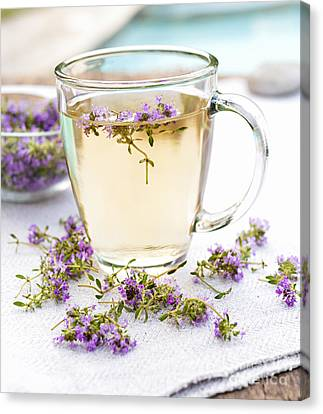 Fresh Thyme Tea Canvas Print by Elena Elisseeva