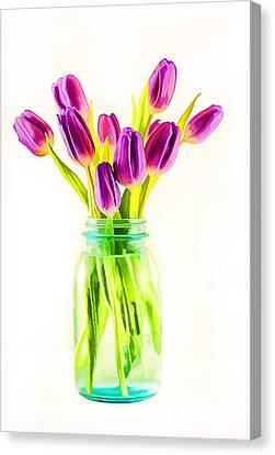 Fresh Tulips Canvas Print by Darren Fisher