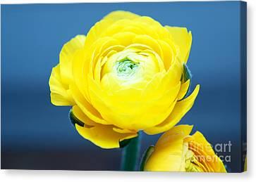 Fresh Yellow Canvas Print by Tatjana Senz