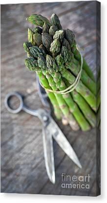 Freshly Harvested Asparagus Canvas Print by Mythja  Photography
