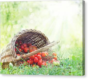Freshly Harvested Tomatoes Canvas Print by Mythja  Photography