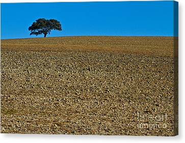 Freshly Ploughed Field     Canvas Print by Heiko Koehrer-Wagner