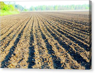 One Point Perspective Canvas Print - Freshly Ploughed Field by Wladimir Bulgar