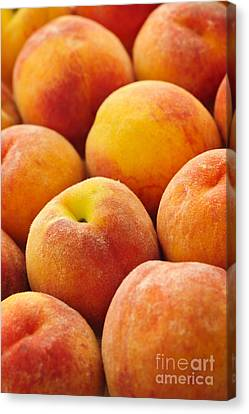 Freshness Of Peaches Canvas Print by Elena Elisseeva
