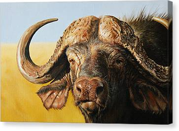 Power Canvas Print - African Buffalo by Mario Pichler