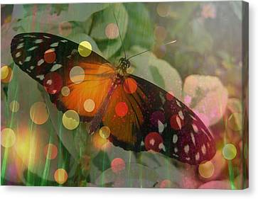 Friend Butterfly Canvas Print by Shirley Sirois