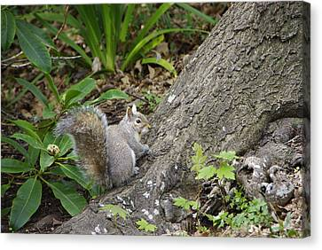 Canvas Print featuring the photograph Friendly Squirrel by Marilyn Wilson