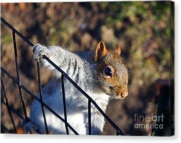 Canvas Print featuring the photograph Friendly Squirrel by Rafael Quirindongo