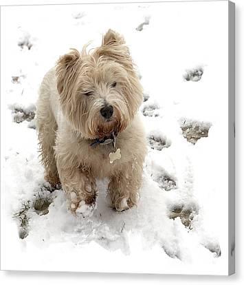 Friendly Terrier Canvas Print by Igor Baranov