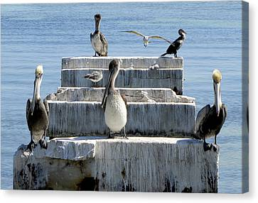 New York New York Com Canvas Print - Pelican Friends by Bob Slitzan