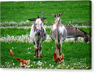 Friends Canvas Print by Dawn  De Vos