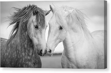 Friends Iv Canvas Print