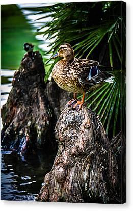 Ducklings Canvas Print - Friends by Sotiris Filippou