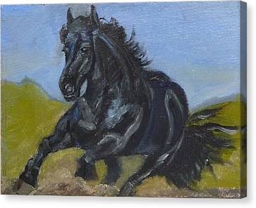 Friesian Canvas Print