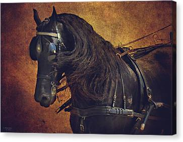 Friesian Under Harness Canvas Print