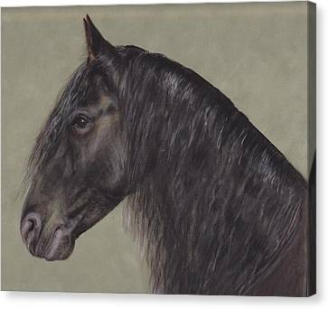 Friesian Wisdom Canvas Print