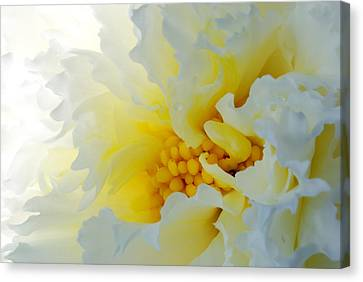 Frilling Canvas Print