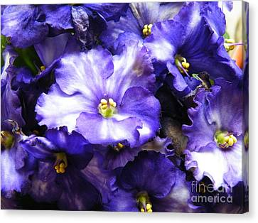 Frills Included Canvas Print