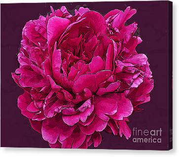 Frilly Lush Bright Pink Peony Canvas Print