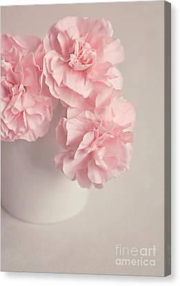 Frilly Pink Carnations Canvas Print