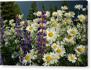 Canvas Print featuring the photograph Frisco Flowers by Lynn Bauer