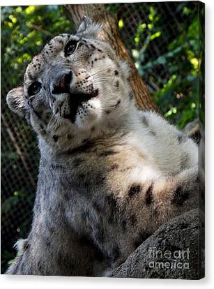 Pittsburgh Zoo Canvas Print - Frisky by Chad Thompson