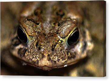 Frog 2 Canvas Print by Optical Playground By MP Ray