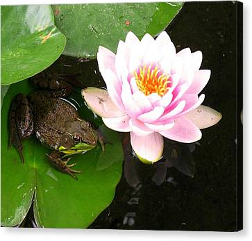 Canvas Print - Frog And Lily by Debbie Finley