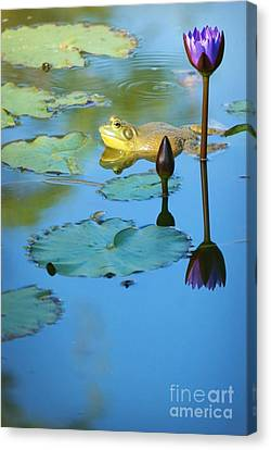 Canvas Print featuring the photograph Frog And Lily by Ellen Cotton