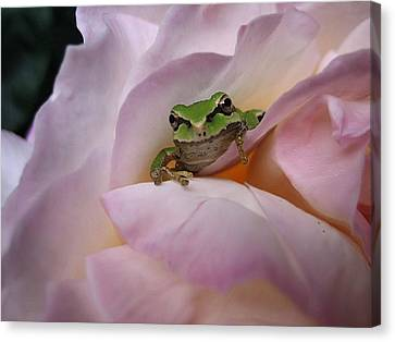 Frog And Rose Photo 1 Canvas Print by Cheryl Hoyle