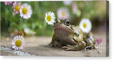 Frog And The Daisy  Canvas Print by Tim Gainey