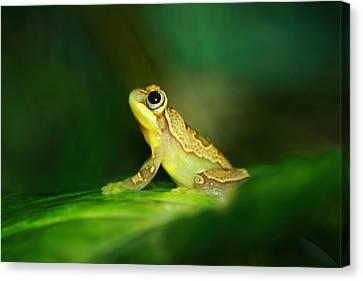 Frog Dreams Canvas Print by Paul Slebodnick