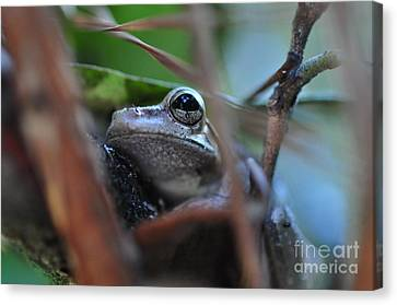 Frog Canvas Print - Frog Eye Tree Hidden by Wayne Nielsen