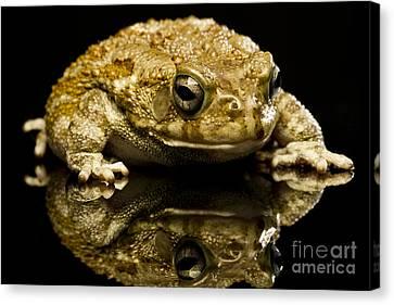 Frog Canvas Print by Gunnar Orn Arnason