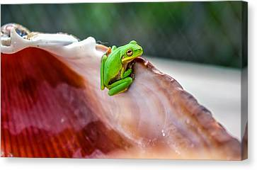 Canvas Print featuring the photograph Frog In A Cockle by Rob Sellers