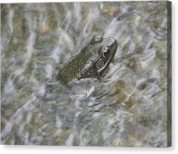 Frog In Rippling Water Canvas Print